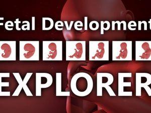 Fetal Development Explorer VR